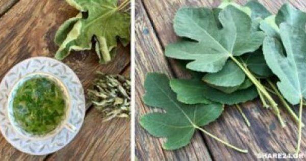 Φύλλα Συκιάς – Οι Θαυμαστές Θεραπευτικές τους Ιδιότητές που Δεν Γνωρίζαμε