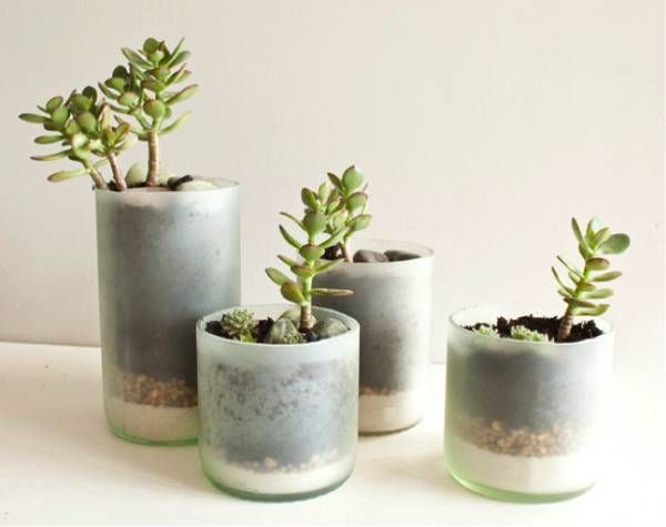 wine bottles repurposed for potted plants