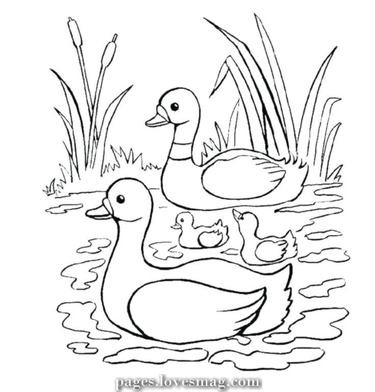 The Best Child Duck Coloring Pages To Print Animal Coloring Pages Coloring Books Coloring Pages
