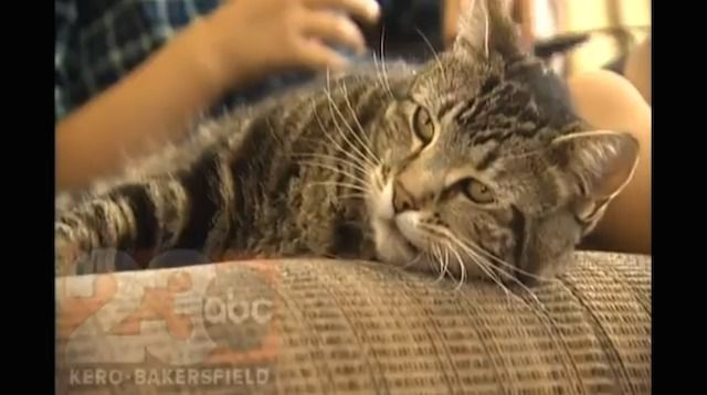 """In true cat fashion... """"Hero Cat Who Saved Child From 'Mean Dog' Grants Interview To Local TV Station."""" Sad about the dog; no one knows what happened or prompted the attack. So thankful for good kitties, though!"""