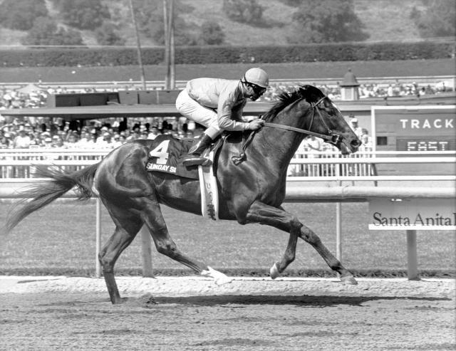 26 Best Sunday Silence Images On Pinterest Horse Racing