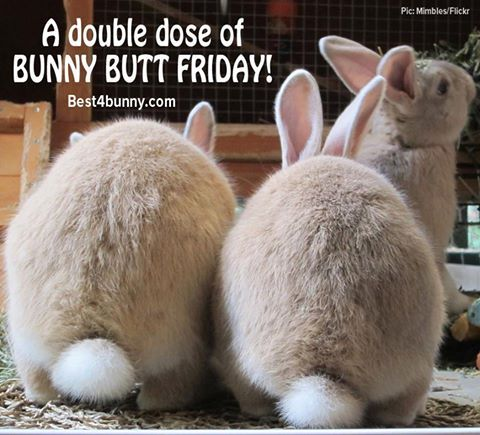 Double the cuteness for 'Bunny Butt Friday' www.best4bunny.com