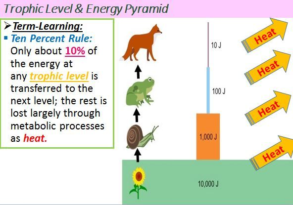 Ecology 10 Rule Energy Pyramid How To Memorize Things Science Teaching Resources