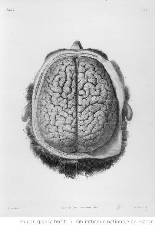 anatomie et physiologie humaine pdf