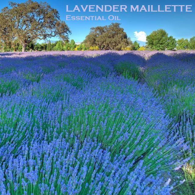 E/O: Lavender (Maillette) Essential Oil (100% Pure, Grade 1 Organic) - 10ml