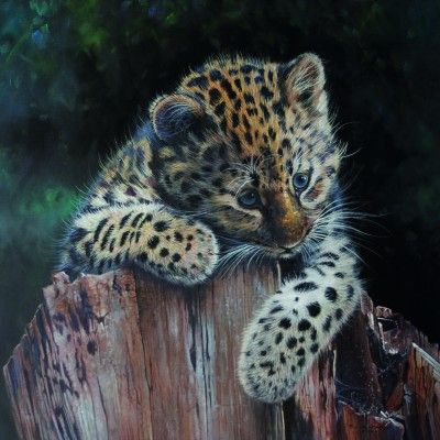 Playful Amur Leopard Cub 2015 20 by 20ins copy