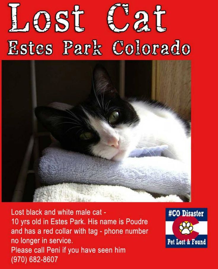 21 best images about Colorado Flood Lost Cats on Pinterest ...