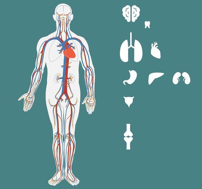 Cardiorespiratory Endurance Definition, Exercise and its Benefits  Cardiorespiratory endurance