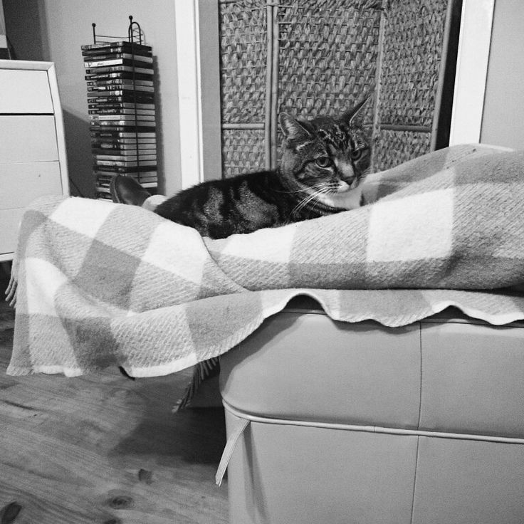 Thomas the cat. Loves to rest on legs, on a blanket.