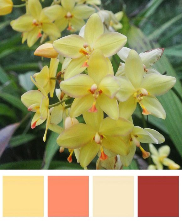 Chair Rail Upside Down Part - 39: Turn Your Porch Into A Tropical Paradise With These Flowery Hues. Colors:  Pineapple Upside