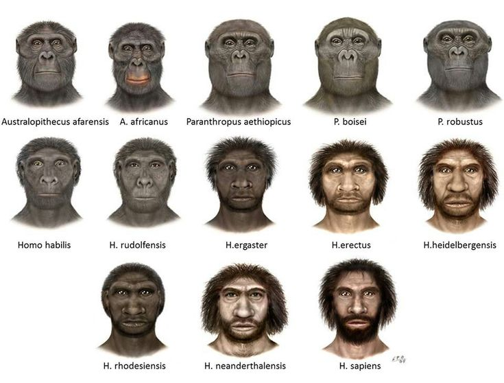 17 Best ideas about Human Evolution on Pinterest | Hominid ...
