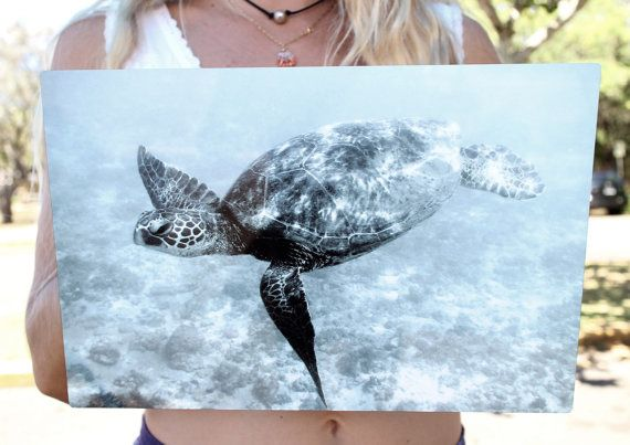 Best 25 Turtle Homes Ideas On Pinterest Sea Turtle