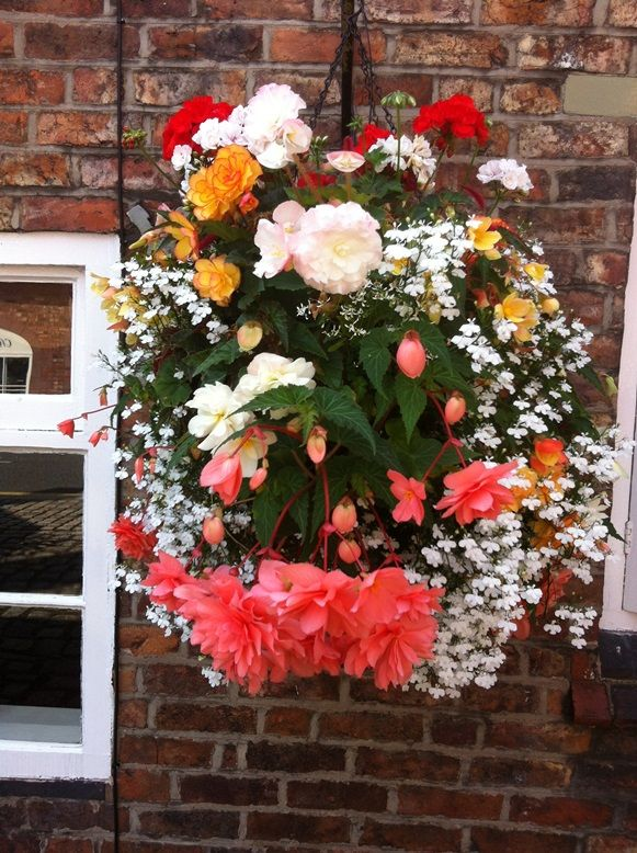 Garden Ideas 2014 Uk 548 best baskets images on pinterest | hanging baskets, flowers