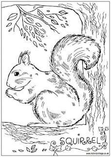 Squirrel Colouring Pages