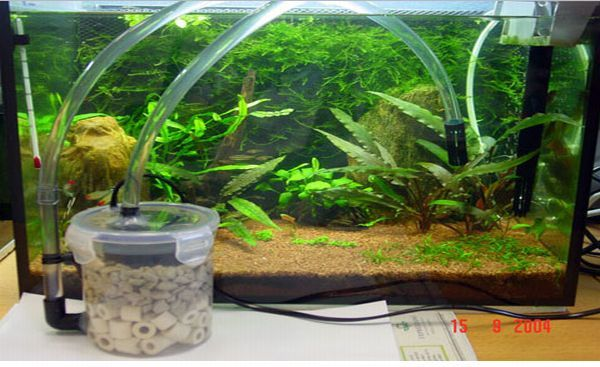 The project  Making filters at home might sound a tricky task but surely isn't if you follow the instructions carefully and work in a stepwise manner. making and maintaining aquarium need filters that play the major role in removing both physical...
