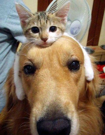At a quick glance looks like a bunny headband on the dog's head, to me at least ;-): Dogs And Cat, Best Friends, So Cute, Funny Pictures, Bestfriends, Pet, Kittens, Headbands, Animal