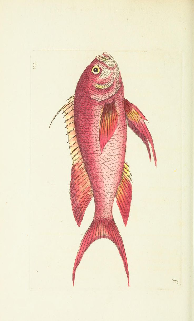 1960 best Peixos images on Pinterest | Fish art, Pisces and Fish