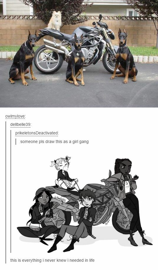 Bikers Are Awesome Saving Cats And Dogs