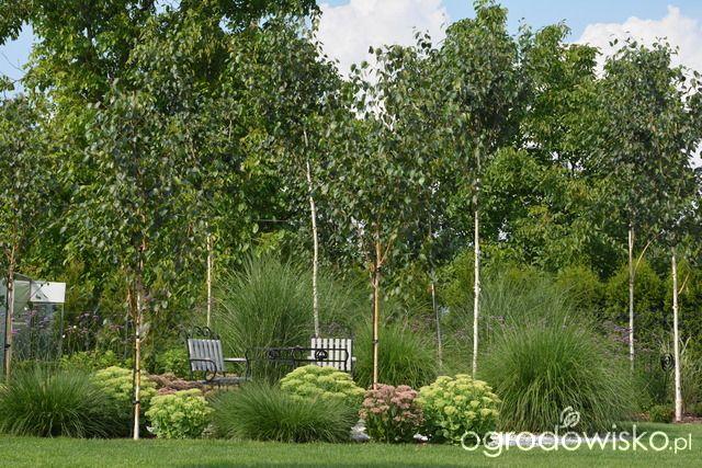 Mój skromny ogród - strona 391 - Forum ogrodnicze - Ogrodowisko