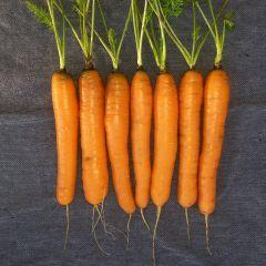 Carrots - Hawthorn Farm Organic Seeds