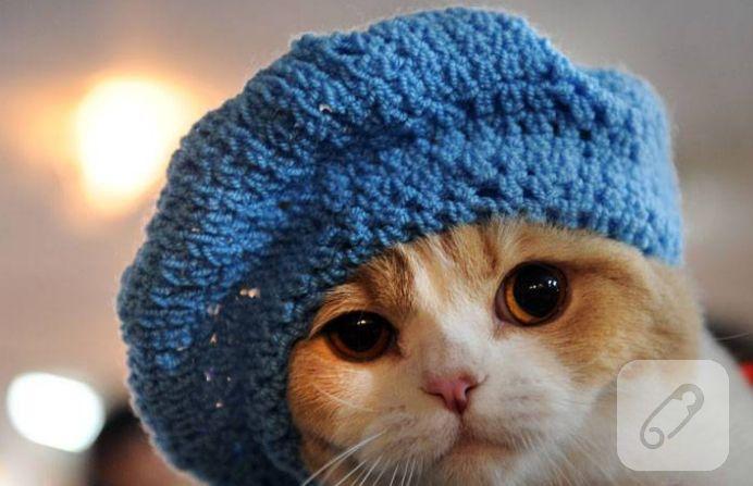 birbirinden sevimli, şapka takmış komik kedi resimleri...