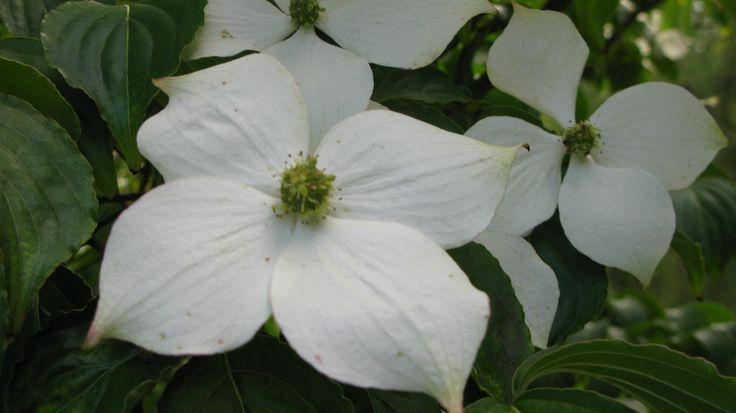 My Flower Spot