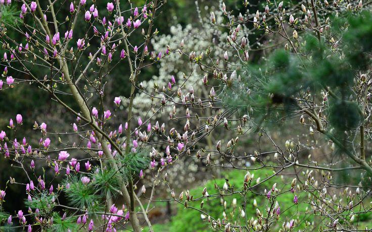 Warsaw Botanical garden | Sigma 180mm f2.8 APO EX DG OS HSM MACRO lens.