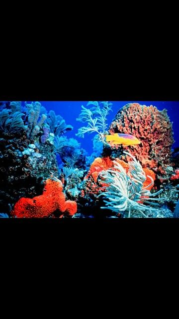 El coral