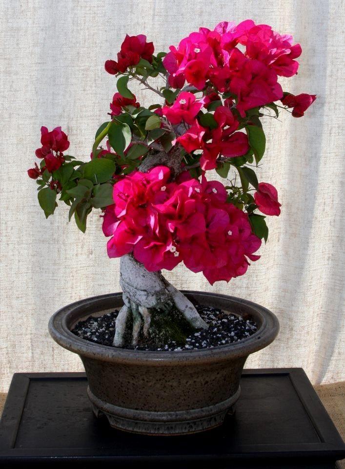 ᴥ֍How do you like this cute #bonsai tree?♣ᴥ       #BonsaiInspiration