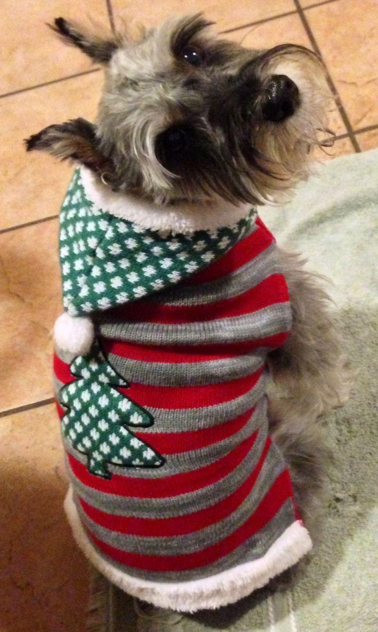 Schnauzer dog sweaters