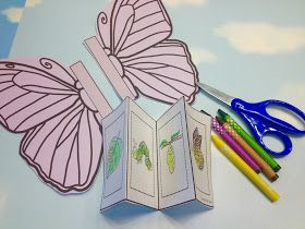 butterfly life cycle sequence cards