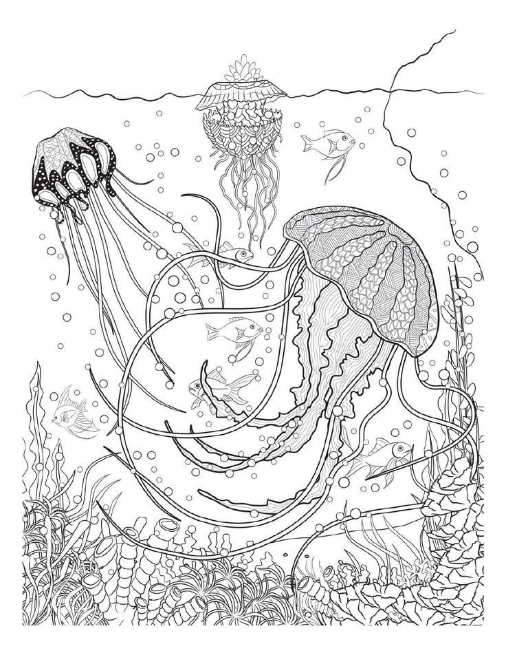 375 Best Coloring Pages To Print Underwater Images On Pinterest Underwater Coloring Pages