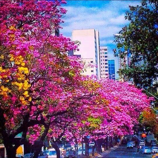 Belo Horizonte em Minas Gerais