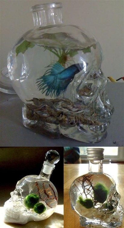 Empty Crystal Head Vodka bottles re-purposed into aquariums