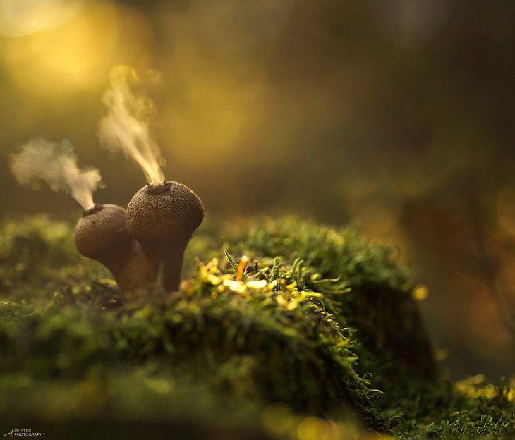 Какие бывают грибы - дождевик фото