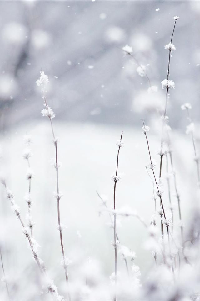 """""""and Winter comes to the earth in flakes and frost, soft and silent, enchanting and implaccable... as the Lover to his beloved."""""""