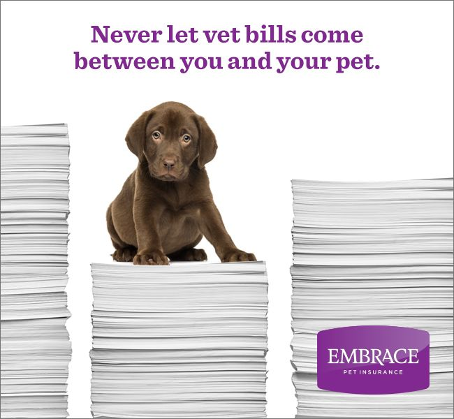 Mind if we pay your vet bills? Get a free quote from Embrace Pet Insurance today.