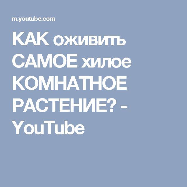 КАК оживить САМОЕ хилое КОМНАТНОЕ РАСТЕНИЕ? - YouTube