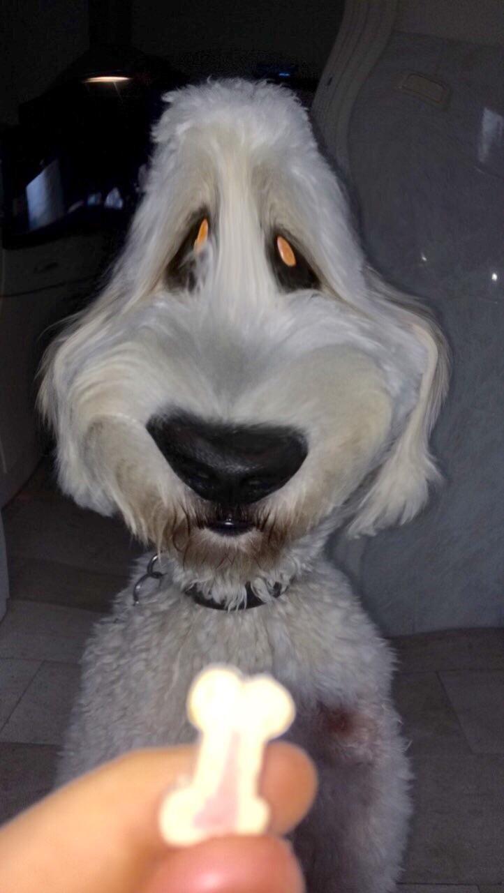 More Snapchat doggo