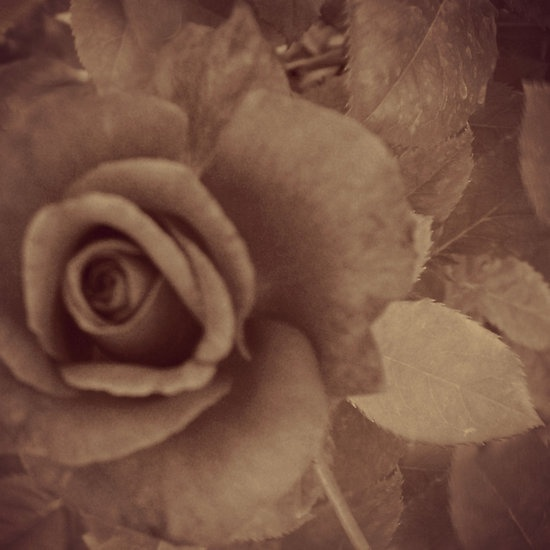 Loves Sweet Bloom