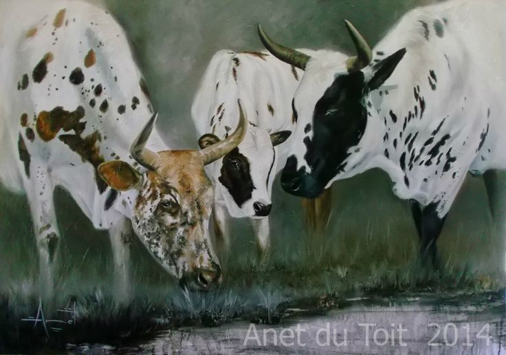 Nguni's Oil on canvas 118 x 84cm