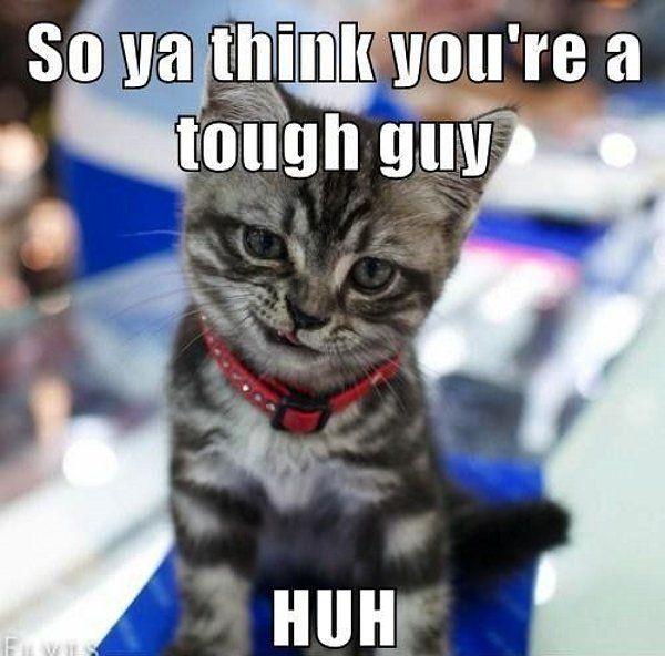 Tough guy kitten