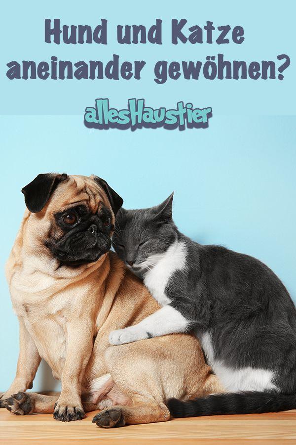 hund und katze aneinander gew hnen hunde animals und dogs. Black Bedroom Furniture Sets. Home Design Ideas