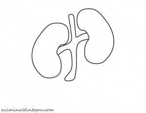 organlarımız temalı kartlar(12)