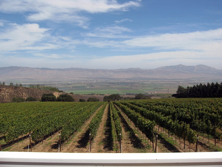 Hahn Vineyards in the Santa Lucia Highlands. Looking over the Salinas Valley, and towards the Gabilan Mtns
