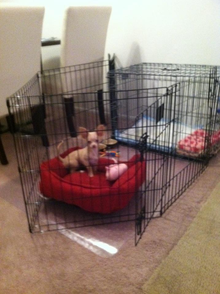Best 25 Potty Training Puppy Apartment Ideas On Pinterest