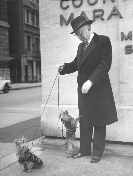 William F Schlemmer of Hammacher Schlemmer, with his pair of Yorkshire terriers-NYC - Photo by Nina Leen - 1944