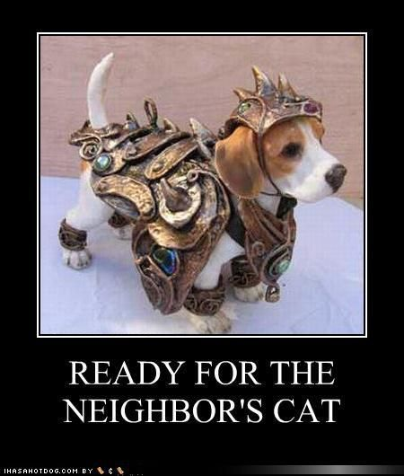 Funny Dog Photos with Captions Ready for the neighbors cat