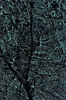 susan derges photogram - Google Search