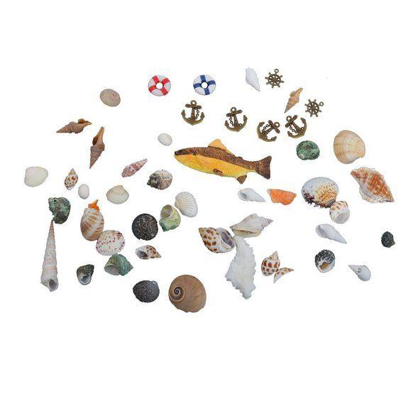 Abbellimenti Naturali Conchiglie Di Mare Pesce Di Ancoraggio Matrimoni Spiaggia Mestiere Arredamento